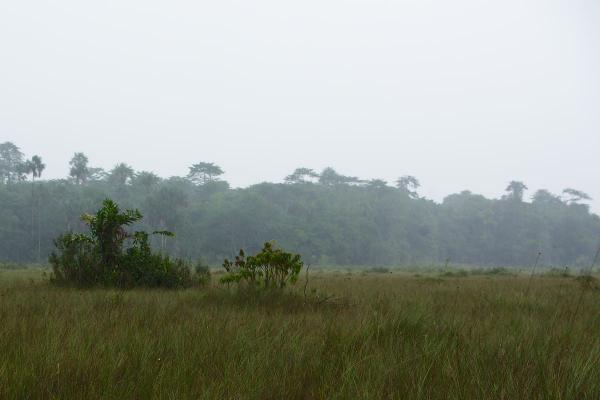 savane du Galion en saison des pluies