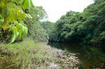 Un étang forestier en début de saison sèche.